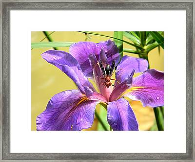 Artistic Purple Iris And Wasp Framed Print by Warren Thompson