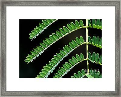 Artsy Green Framed Print by Sabrina L Ryan