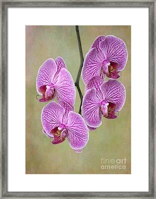 Artsy Phalaenopsis Orchids Framed Print by Sabrina L Ryan