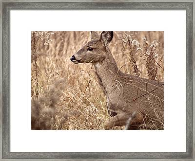 As Close As Possible Framed Print by Thomas Young