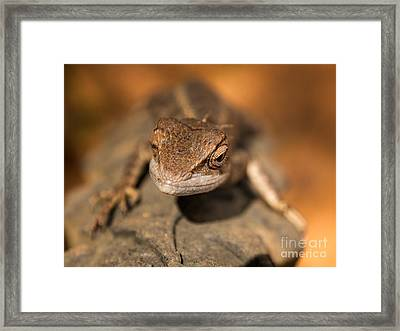 As I Climb Higher Framed Print by Venura Herath