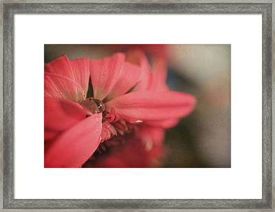 As I Sit By The Window Framed Print by Laurie Search