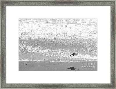 As  The Crow Flies Framed Print by Artist and Photographer Laura Wrede