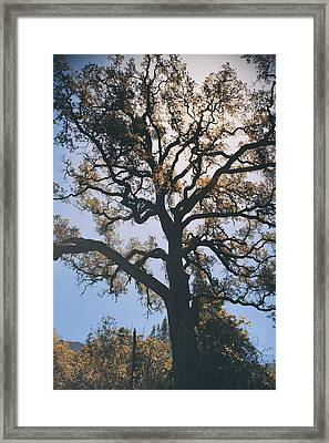 As We Grow And Change Framed Print by Laurie Search