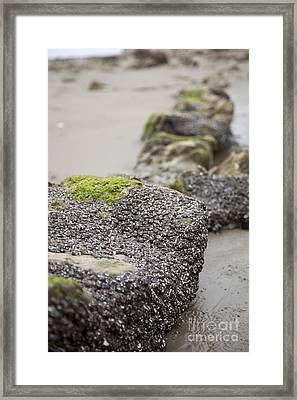 As You Leave Framed Print by Amanda Barcon