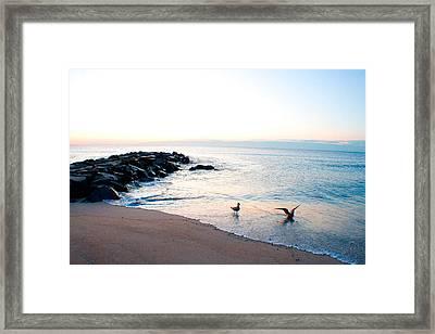 Asbury Seagulls Framed Print by Jon Emery