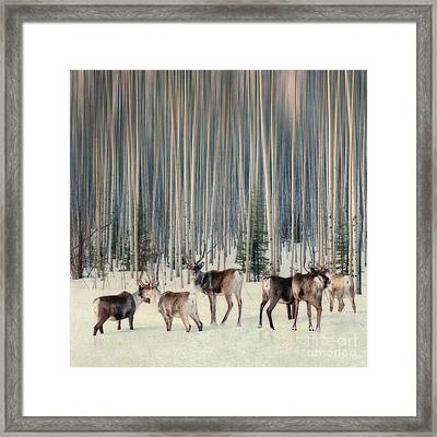 Caribou And Trees Framed Print by Priska Wettstein