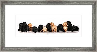 Ash Trail Pups Framed Print by Pam Gabriel