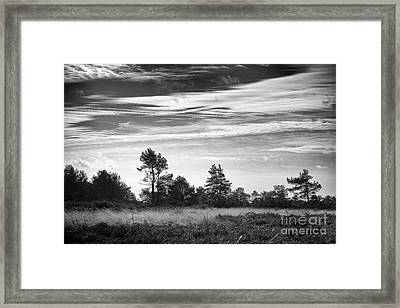 Ashdown Forest In Black And White Framed Print by Natalie Kinnear