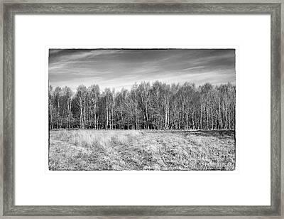Ashdown Forest Trees In A Row Framed Print by Natalie Kinnear