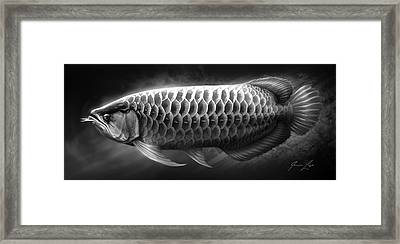 Asian Arowana_01 Framed Print by Javier Lazo