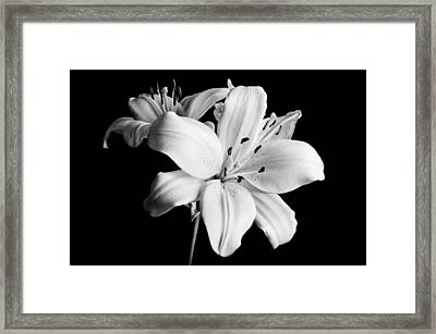 Asian Lilies 1 Framed Print by Sebastian Musial