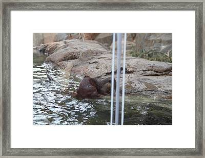 Asian Small Clawed Otter - National Zoo - 01139 Framed Print by DC Photographer