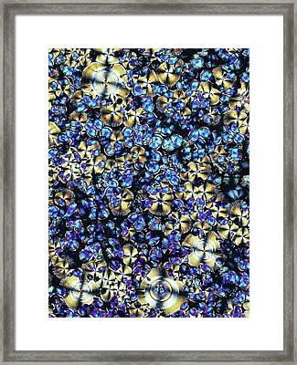 Asparagine Crystals Framed Print by Alfred Pasieka