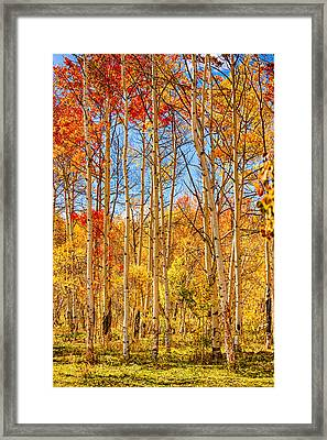 Aspen Fall Foliage Portrait Red Gold And Yellow  Framed Print by James BO  Insogna