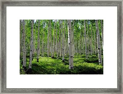 Aspen Glen Framed Print by The Forests Edge Photography - Diane Sandoval