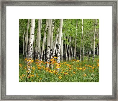 Aspen Grove And Wildflower Meadow Framed Print by Matt Tilghman