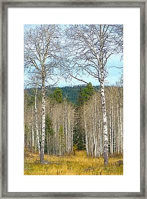 Aspen Grove Digital Oil Painting Framed Print by Sharon Talson