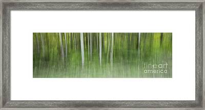 Aspen Grove  Framed Print by Priska Wettstein