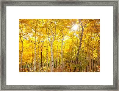 Aspen Morning Framed Print by Darren  White