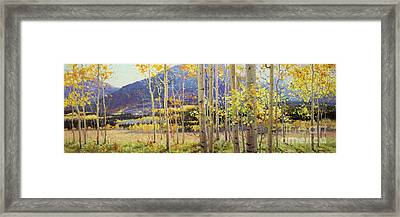 Panorama View Of Aspen Trees Framed Print by Gary Kim
