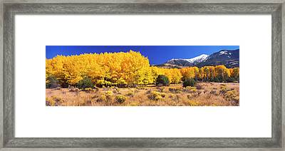 Aspen Tree With Sangre De Cristo Framed Print by Panoramic Images