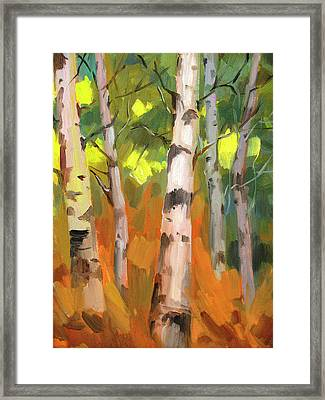 Aspen Trees Framed Print by Diane McClary