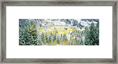 Aspen Trees On Mountain Framed Print by Panoramic Images