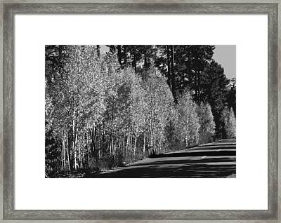 Aspens Framed Print by Jack McAward