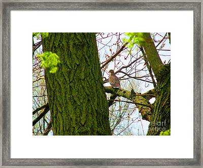 Assessing The View Framed Print by Tina M Wenger