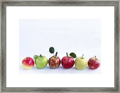 Assorted Apples Framed Print by Science Photo Library