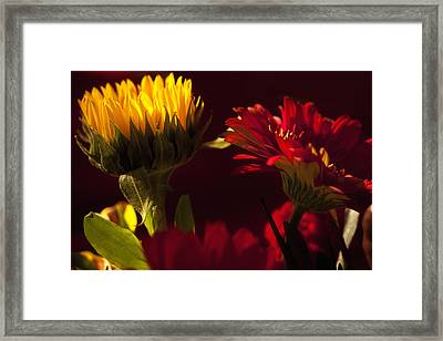 Asters In The Light Framed Print by Andrew Soundarajan