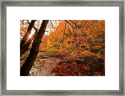 At Its Best Framed Print by Lourry Legarde