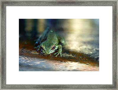 At Swim One Frog Framed Print by Laura Fasulo