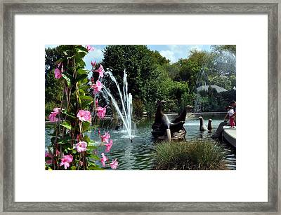 At The Zoo Framed Print by Marty Koch