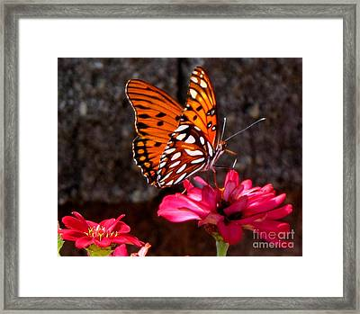 At Work Framed Print by Gardening Perfection