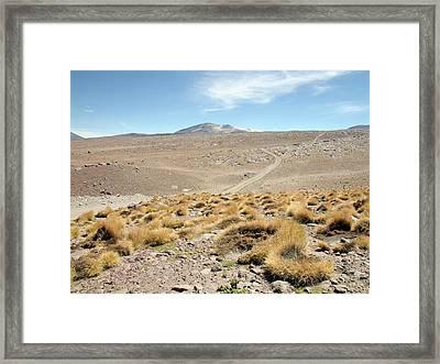 Atacama Desert Vegetation Framed Print by European Southern Observatory
