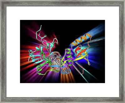 Atp-dependent Dna Ligase Molecule Framed Print by Laguna Design