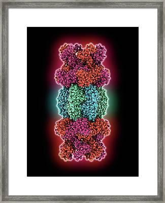 Atp-dependent Protease Molecule Framed Print by Laguna Design