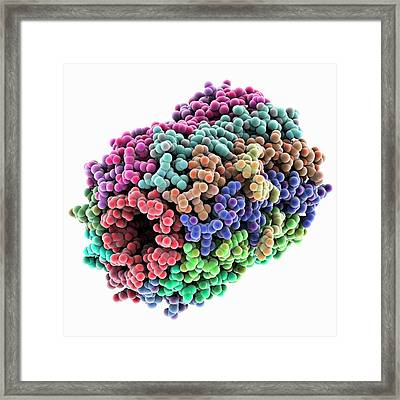 Atp Synthase Rotor Ring Framed Print by Laguna Design
