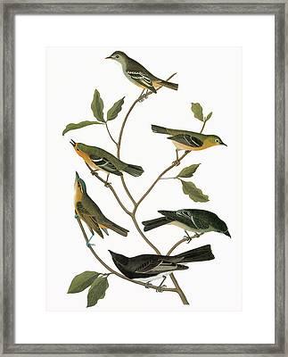 Audubon Flycatchers Framed Print by Granger