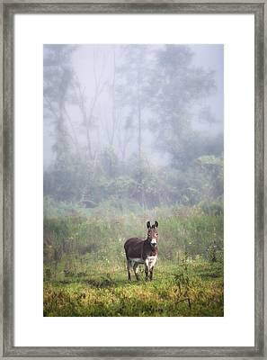 August Morning - Donkey In The Field. Framed Print by Gary Heller