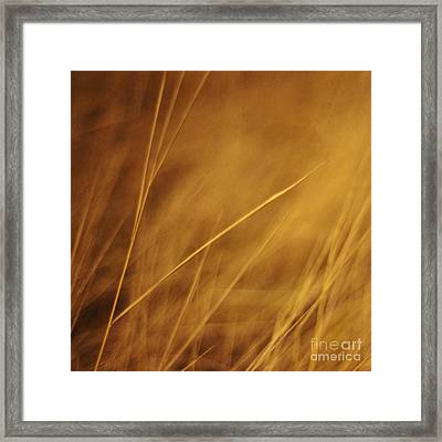 Aurum Framed Print by Priska Wettstein