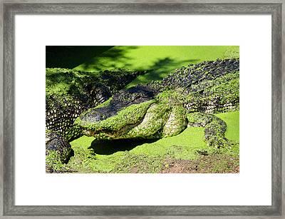 Australia, Broome Framed Print by Cindy Miller Hopkins