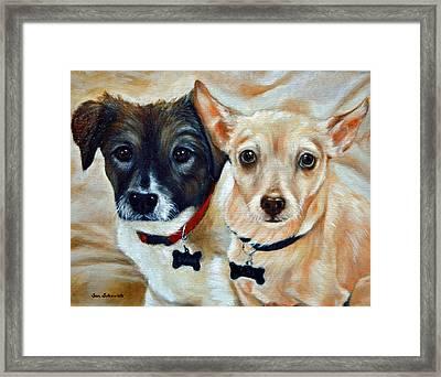 Australian Shepared And Chihuahua Basengi Mix  Framed Print by Sun Sohovich