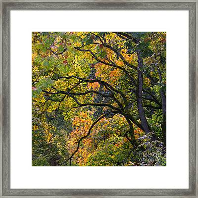 Autumn 05 Framed Print by Tom Uhlenberg
