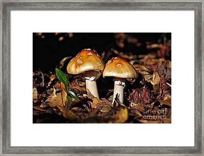 Autumn Amanitas Framed Print by Al Powell Photography USA