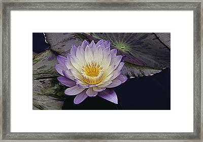 Autumn Aquatic Bloom Framed Print by Julie Palencia