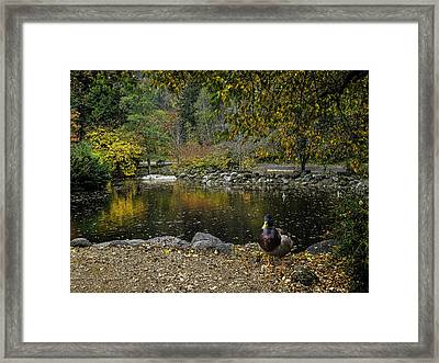 Autumn At Lithia Park Pond Framed Print by Diane Schuster