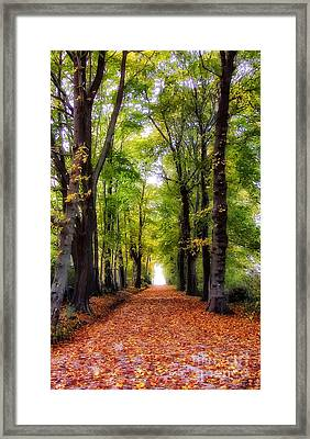 Autumn Avenue Framed Print by Mike Nellums
